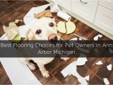 Good Flooring for Dog Owners Types Of Flooring for Pet Owners In Ann Arbor Mi
