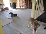 Good Flooring for Dogs Flooring Best Flooring for Dogs Best Hardwood Floor