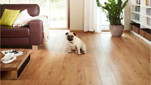 Good Flooring for Dogs the Best Flooring for Dogs Looking for the Perfect Option