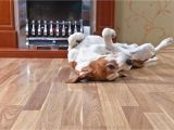 Good Flooring for Dogs What is the Best Flooring for Dogs and Other Rambunctious