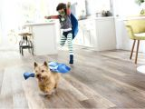 Good Flooring for Large Dogs Best Hardwood Floors for Large Dogs Gurus Floor