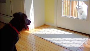 Good Flooring for Large Dogs Best Wood for Floors Of the Best Apartments Best