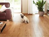 Good Wood Flooring for Dogs the Best Flooring for Dogs Looking for the Perfect Option