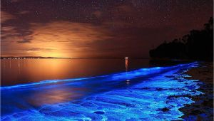 Grand Cayman Bioluminescence tour Australian Sunset Illuminated with the Blue Glow Of Bioluminescent