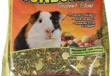 Guinea Pig soft toy Amazon Amazon Com Higgins Sunburst Gourmet Food Mix for Guinea Pigs 3