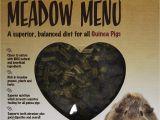 Guinea Pig toys Amazon Amazon Com Rosewood Pet Meadow Menu Guinea Pig Food 1 Case 4 4