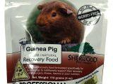 Guinea Pig toys Amazon Amazon Com Sherwood Pet Health Recovery Food for Guinea Pigs Sarx