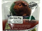 Guinea Pig toys On Amazon Amazon Com Sherwood Pet Health Recovery Food for Guinea Pigs Sarx