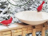 Heated Bird Bath Menards Help Your Feathered Friends Survive the Cold with Heated