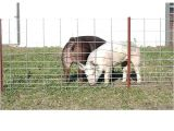 Hog Panels Rural King Hog Fence Panels Image Of Hog Panel Fencing Ideas Hog Wire