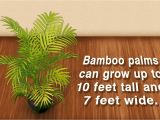 Homemade Fertilizer for Palm Trees Indoor Palm Tree Types