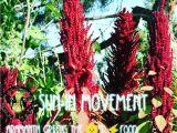 Hopi Red Dye Amaranth Aramanth Instagram Photos and Videos Tupgram Com