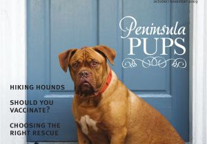 How to Euthanize A Dog with Benadryl Lowcountry Dog Magazine October November 09 by Leah England issuu