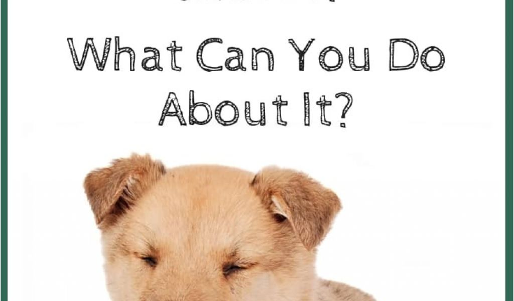 How to Euthanize A Dog with Benadryl What Causes Dog ...
