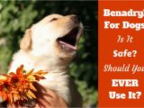 How to Euthanize A Dog with Sleeping Pills How Much Benadryl Dosage for Dogs Antihistamine for Puppies