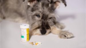 How to Euthanize A Dog with Sleeping Pills How to Euthanize A Dog with Sleeping Pills Mom Love Pets