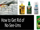 How to Get Rid Of Noseeum Bites No See Ums top 9 Repellents Traps Zappers and Special