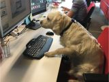 Is there A Dating Site for Animal Lovers Take Your Dog to Work Day Best Photos Of People Bringing their Pets
