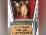 Just so You Know there S Like A Lot Of Dogs In Here Doormat Category Shirk Report Page 2twistedsifter