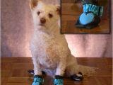 Laminate Flooring Dogs Slipping Best Dog Booties for Hardwood Floors Gurus Floor