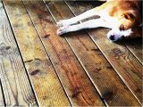 Laminate Flooring with Dogs Laminate Flooring Protect Laminate Flooring From Dogs