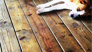 Laminate Flooring with Dogs Laminate Flooring Protect Laminate Flooring From Dogs