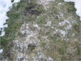 Lawn Sprinkler Repair fort Collins fort Collins Snow Mold Treatment fort Collins Lawn and