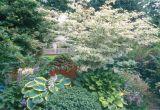 Little Poncho Dwarf Dogwood Five Dogwoods that Deliver Stunning Blooms oregonlive Com