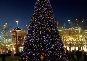Living Christmas Tree Columbus Ohio butterfly Lights for Ceramic Christmas Tree Tag 10