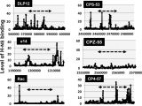 Log Cabin Kits Under $50000 Altered Distribution Of Rna Polymerase Lacking the Omega Subunit