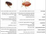 Mattress Usa Dothan Al Bed Bugs Vs Fleas Table Fleas In Mattress 3 Riasztoszerelo Com