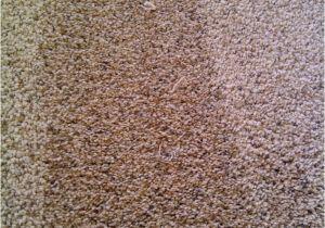 Mohawk Smartstrand Silk Reviews Best Vacuum for Mohawk Smartstrand Silk Carpet Www