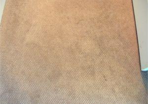 Mohawk Smartstrand Silk Reviews Mohawk Carpet Warranty Complaints Floor Matttroy