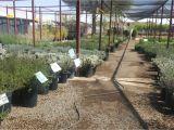 Northeast Plant World Nursery El Paso Tx Eastside Discount Nursery Plant Nursery In El Paso