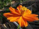 Orange Flowers Names and Pictures orange Flower Madang Ples Bilong Mi