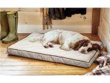 Orvis Bedside Platform Dog Bed orvis Airfoam Platform Dog Bed