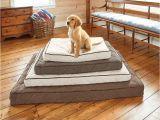Orvis Bedside Platform Dog Bed orvis Airfoam Platform Dog Bed orvis Airfoam Platform Dog