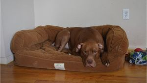 Orvis Bedside Platform Dog Bed orvis Bedside Platform Dog Bed Content Filed Under the Dog