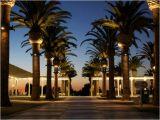 Palm Tree Lighting Ring B K Lighting Architectural Outdoor Landscape Lighting Palm