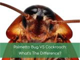 Palmetto Bug Vs Cockroach Palmetto Bug Vs Cockroach What 39 S the Difference Nov 2018