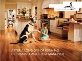 Pergo Flooring Good for Dogs Pergo Flooring for Pets 28 Images What is the Best