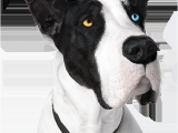 Pergo Flooring Good for Dogs Pergo Flooring Reviews Dogs Gurus Floor