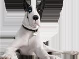 Pergo Flooring Good for Dogs Pergo Website Sitemap Browse All Pergo Web Pages Pergo