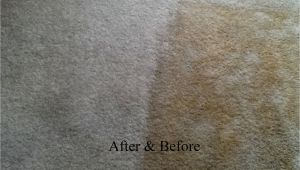 Personal touch Carpet Cleaning Chillicothe Ohio Personal touch Carpet Cleaning Chillicothe Oh 45601 Yp Com
