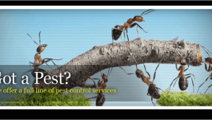 Pest Control Hot Springs Ar Advanced Pest Control Pest Control and Removal Hot