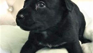 Pet Stores In Beaumont Texas Dogs for Adoption In Keller Texas Petcurious