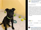 Pet Stores In southeast Texas Dog Survives Euthanasia attempt Gets New Home