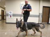 Pet Supplies Beaumont Tx Hewitt Pd Welcomes New Drug Dog Hewitt Wacotrib Com