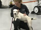 Pet Supplies Beaumont Tx northeast Shelters Mobilize to Help areas Impacted by Hurricanes