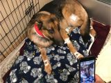 Pets In Beaumont Texas Dog Shot Multiple Times Saved 16 Year Old Owner From Burglary